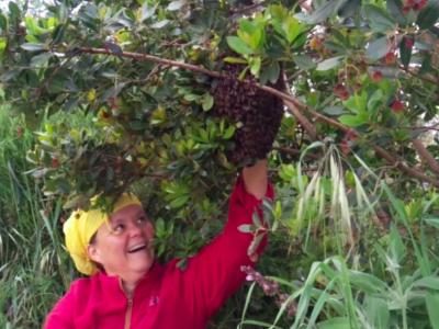 Video BEE HAPPY